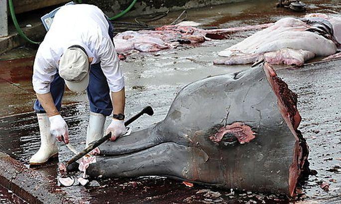 Walfang Japan Fukushima