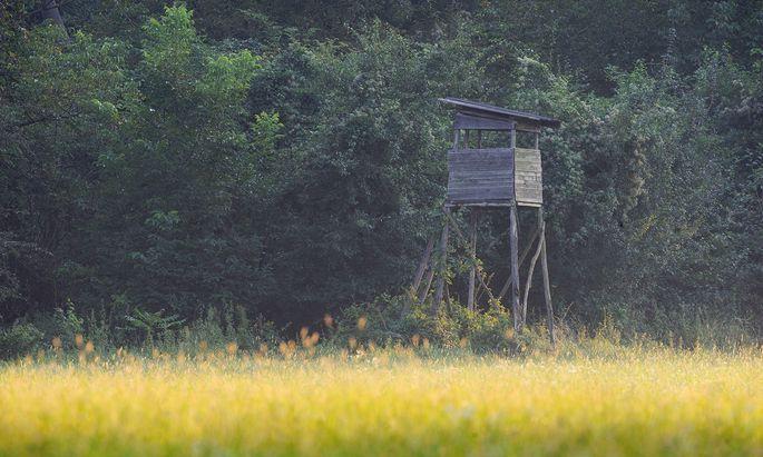 In Zeiten der Coronakrise suchen vor allem in stadtnahen Wäldern viele Menschen Ruhe und Erholung.