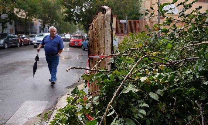 Umgestürzter Baum in Palermo
