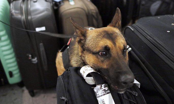 Archivbild: Spürhund-Einsatz am Flughafen Wien-Schwechat