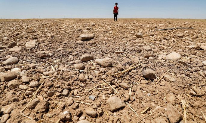 Die Hitze hat agrarische Anbauflächen im Ostirak in Einöden verwandelt.