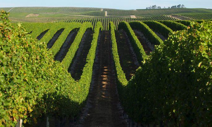 A Yealands Estate vineyard near Blenheim