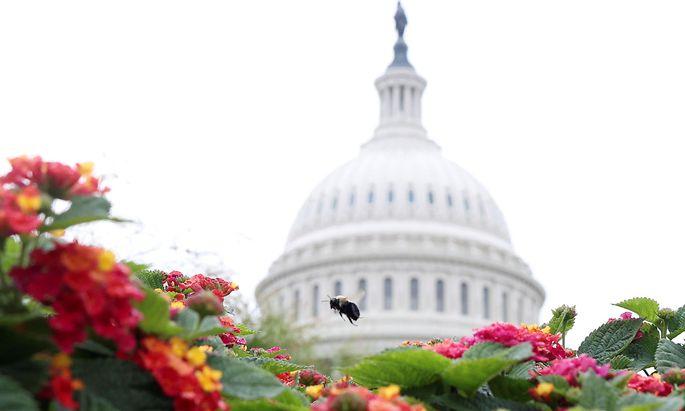 Das Kapitol in Washington D.C. ist Sitz von Repräsentantenhaus und Senat der USA.