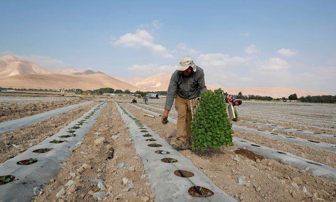Das fruchtbare Westjordantal ist umstritten.