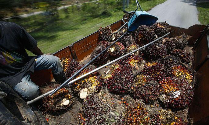 Rund 86 Prozent des weltweiten Palmöls werden in Indonesien und Malaysia produziert.