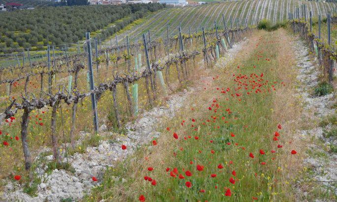 Vielfalt zwischen den Weinstöcken, untersucht auf Versuchsflächen in Österreich, Rumänien, Frankreich und Spanien (Bild).