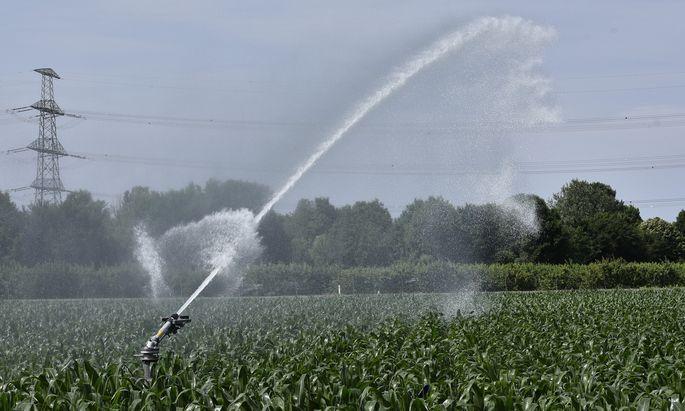 Um genug Wasser in den Trockengebieten zu haben, denkt die Landwirtschaftskammer über die Umleitung von Donauwasser nach.