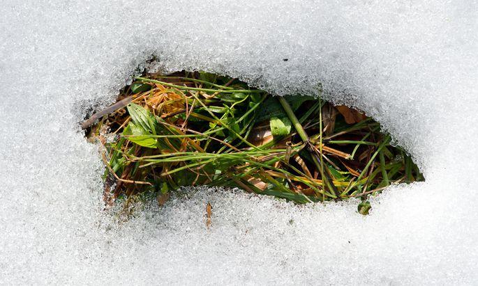 Schneemangel