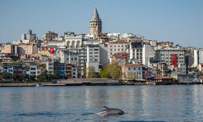 Der Bosporus in Istanbul: Wo sonst der Schiffsverkehr brummt, tummeln sich während der Coronapandemie ungestört die dort heimischen Delfine.