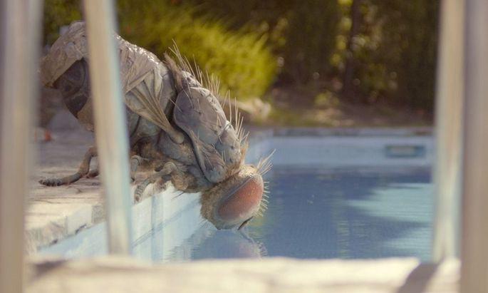 """Diese süße Fliege muss man einfach lieben: """"Mandibules"""""""
