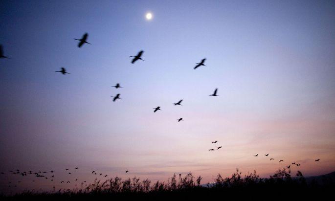 Zugvögel Kommen Zurück 2021
