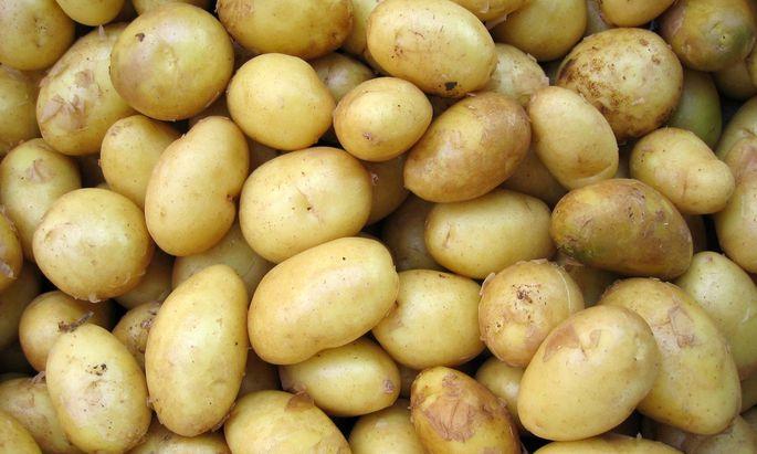 Wissenschaftler fanden nach den molekularen Mechanismen, die Kartoffeln resistent gegen den Klimawandel machen.