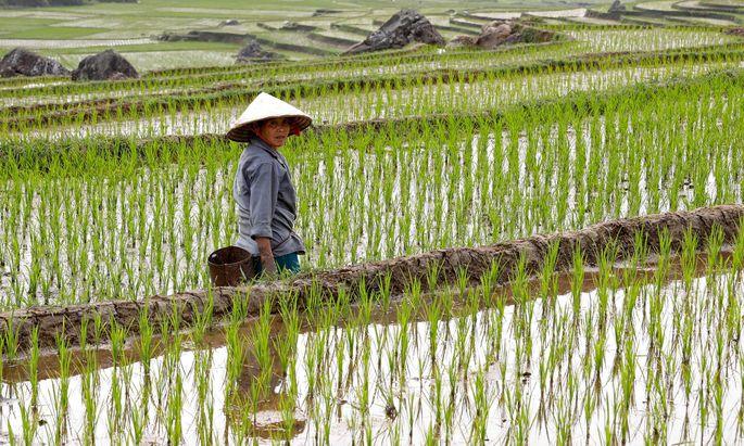Vietnam stoppt vorerst seine Reisexporte, um die Nahrungsmittelversorgung der eigenen Bevölkerung sicherzustellen.