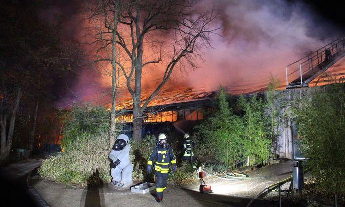 Das Feuer im Affenhaus.