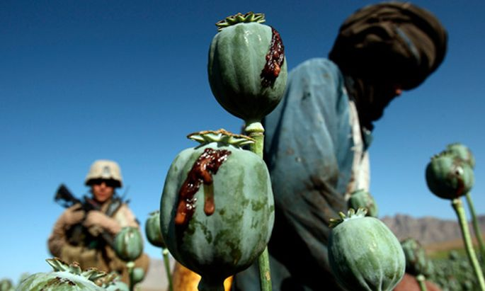 Nato erlaubt Afghanen Opium