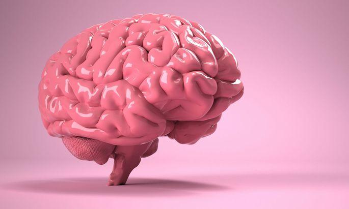 Unser bestes Organ: das Gehirn.