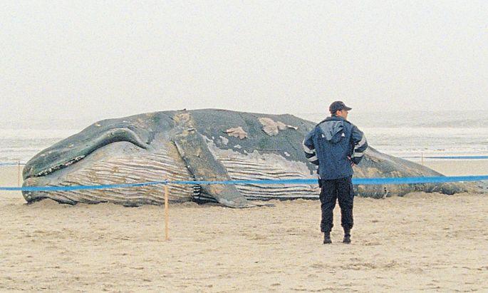 Portugiesen träumen zu Krisenzeiten von gestrandeten Walen: Regisseur Miguel Gomes mischt Fakt und Fiktion, um von den Nöten seiner Heimat zu erzählen.