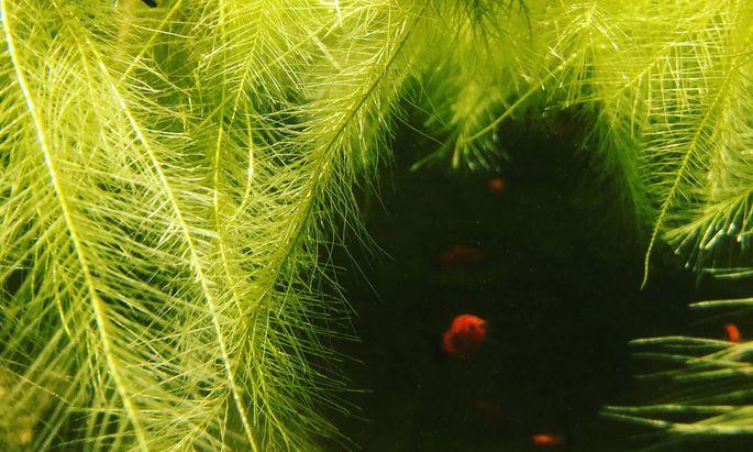 Der asiatischen Gartenkultur verdanken wir wunderschöne Miniteiche.