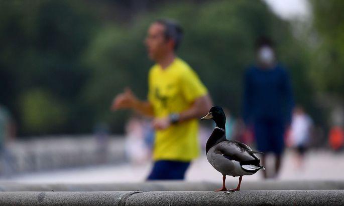 Können Enten sterben, wenn man sie mit Brot füttert? Im Bild eine Aufnahme aus Madrid