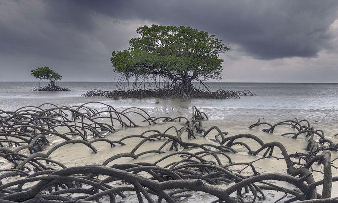 In solchen Wäldern - hier einer an einer Küste Australiens – blüht Leben, lockendes und gefährliches.