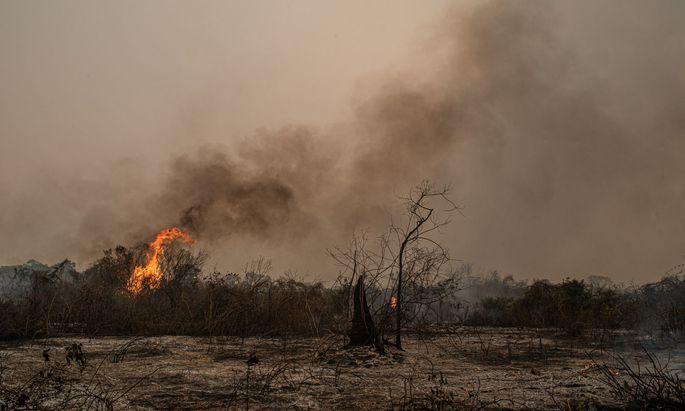 Wird in Brasilien ein Stück Regenwald brandgerodet, entweicht der in den Pflanzen gespeicherte Kohlenstoff sofort.