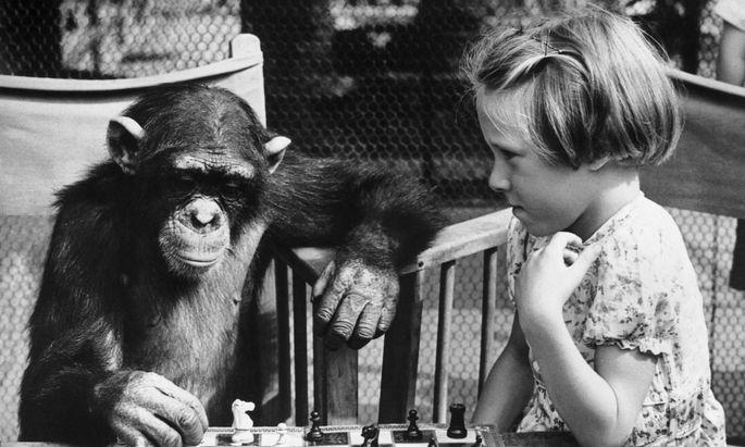 Naja, dieses Bild aus dem Londoner Zoo und den 1950er-Jahren suggeriert zu viel Nähe. Aber woher kommt der Unterschied?