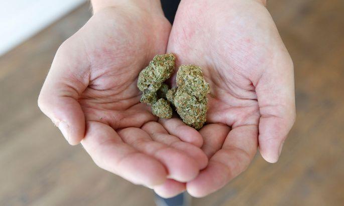 Themenbild: Cannabis
