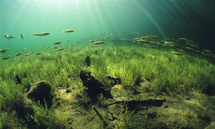 Süßwasser-Wissenschaftler aus der ganzen Welt erforschen den Lunzer See im Ybbstal.