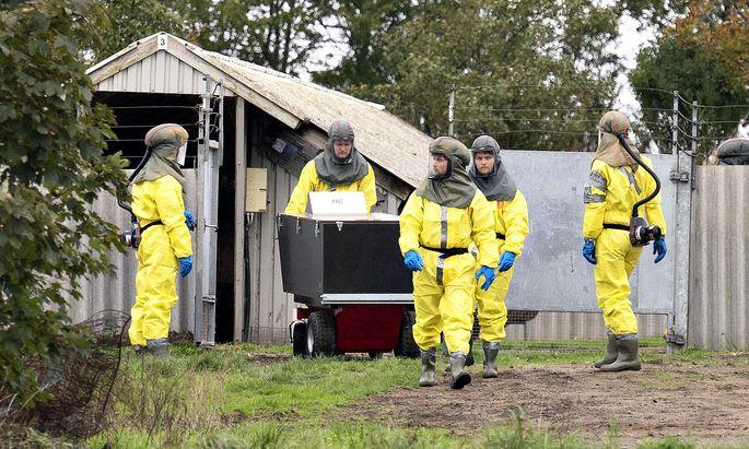 Dänemark will Millionen Nerze töten: Tiere tragen mutierte Corona-Variante