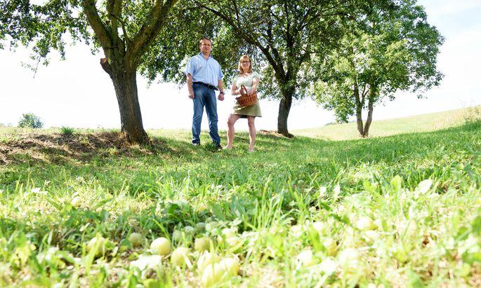 Hubert und Ottilie Hackl unter den Kriecherlbäumen – die viele Früchte abwerfen.
