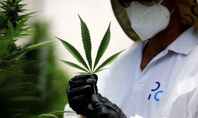 Cannabis-Produzenten sind bei Anlegern beliebt.