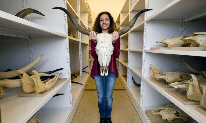 """""""Anfangs musste ich im Museum lernen, die vielen Tierknochen und ihre Fragmente zu bestimmen"""", erzählt Konstantina Saliari."""
