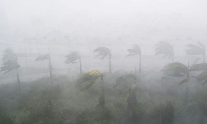 """Ein Bild von """"Irma"""" in Miami."""