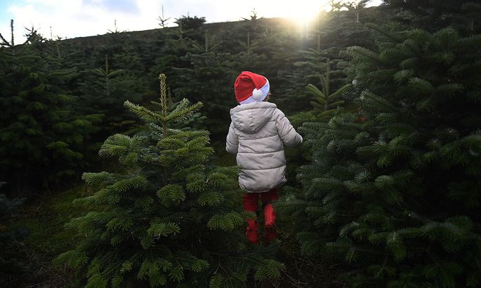 Sebastian Barry, aged 4, runs through a forest of Christmas trees before his family choose which one to buy at Wicklow Way Christmas tree farm in Roundwood