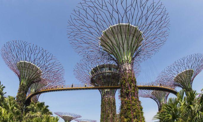 """Die mit seltenen Pflanzen bewachsenen """"Supertrees"""" in Singapur sind ein Touristenmagnet."""