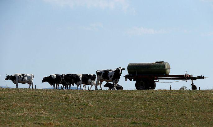 Ein Feld in Frankenfeld in Deutschland. Die EU-Agrarreform trifft jeden Betrieb - unabhängig von der Größe.