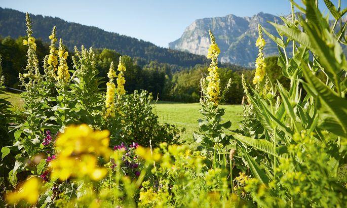 Natürlich. Einige der verwendeten Pflanzen wachsen im Garten vor dem Haus.