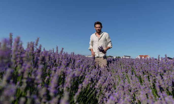 Provence oder pannonische Tiefebene? Stefan Zwickl baut für seine Manufaktur Steppenduft exotische Heil- und Duftpflanzen an.