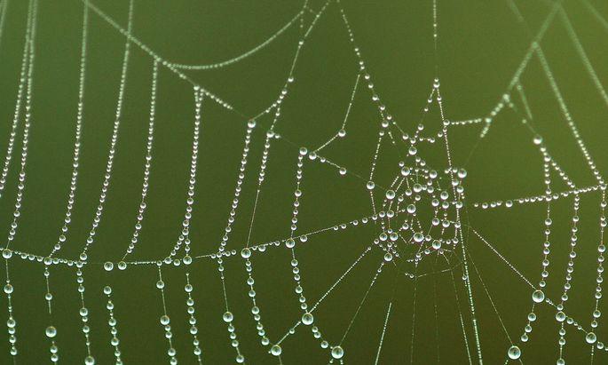 Spinnennetz mit Morgentau
