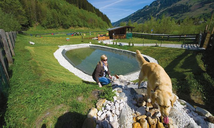 Badeteich für Hunde im Hotel Grimming Dogs and Frieds in Rauris