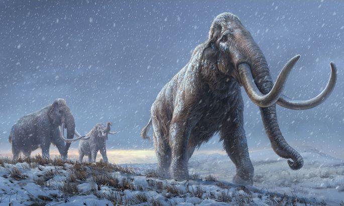 An die Kälte angepasst: So stellt man sich die Vorfahren der Wollhaarmammuts vor.