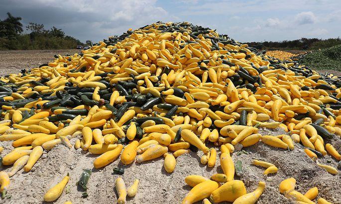 Gemüsebauern in Europa fehlen die Erntehelfer.
