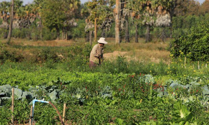 Wer in Thailand außer Reis auch Gemüse anbaut, kommt besser mit dem Klimawandel zurecht.