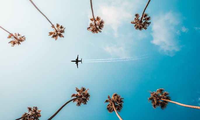 Directly Below Shot Of Trees And Airplane Against Sky