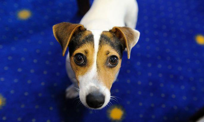 Hunde sollen für die Diagnose eingesetzt werden