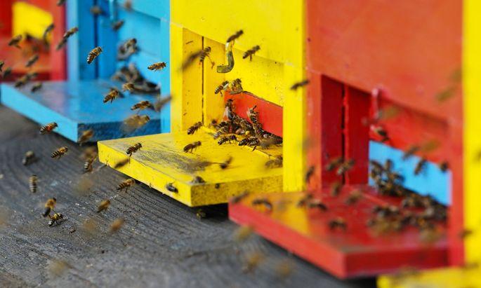 BienenBienen in der Stadt halten – geht das? Ja, mit genügend Abstand, und sogar auf dem Dach.