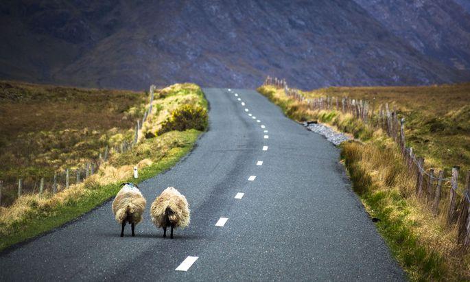 Die Grenze zwischen Nordirland und der Republik Irland ist 499 Kilometer lang – und lässt sich wegen ihres mäandernden Verlaufs und der mehr als 200 befahrbaren Grenzübergänge nur äußerst schwierig kontrollieren.