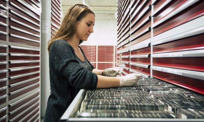 In Parafin eingebettete Gewebeschnitte lagern zu Tausenden in der Biobank der Med-Uni Graz und werden derzeit digitalisiert.