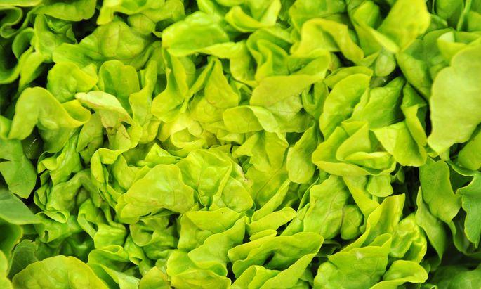 Jeder Blattsalat, der über 22 Grad keimt, gehört künftig dem niederländischen Saatguthersteller Rijk Zwaan.