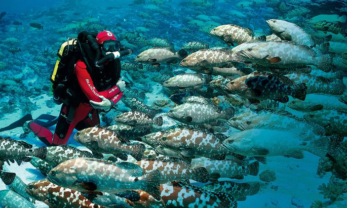 Blancpain unterstützt die Organisation Oceana, die sich ausschließlich dem Schutz der Ozeane widmet.